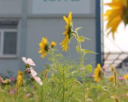 Wheaty: Konsequent nachhaltige Fleischalternativen