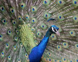 Fragwürdiger Tierschutz: IKEA gibt Preis zurück
