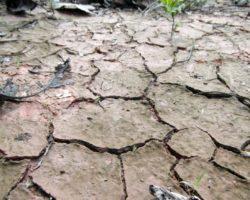 Leugnung des Klimawandels ist Menschheitsverbrechen