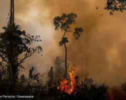 Brennender Amazonas: Das politische Netz der Brandstifter