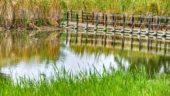 Trump-Administration widerruft Regularien zum Gewässern und Feuchtgebieten