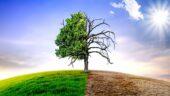 Treibhausgasemissionen: Tierkonsum ist größter Faktor